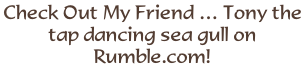 Check Out My Friend … Tony the tap dancing sea gull on Rumble.com!